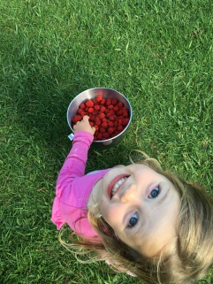 Foraged food doesn't get much better than wild rasberries